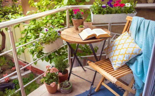▷über 1000 Balkonpflanzen - Gartenpflanzen, Zimmerpflanzen ... Zimmer Und Balkonpflanzen Winter Tipps