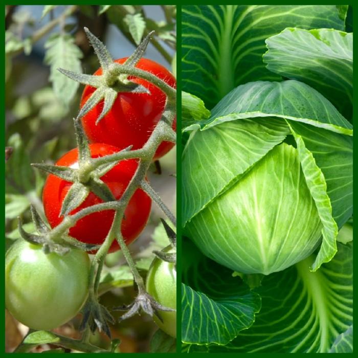 biogarten gemuese kombinationen
