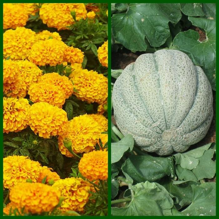 biogarten pflanzen kombinationen
