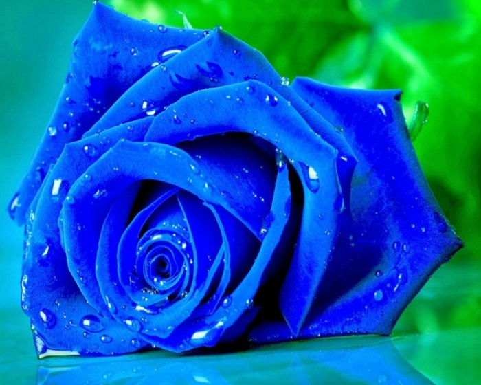 blaue rosen farben