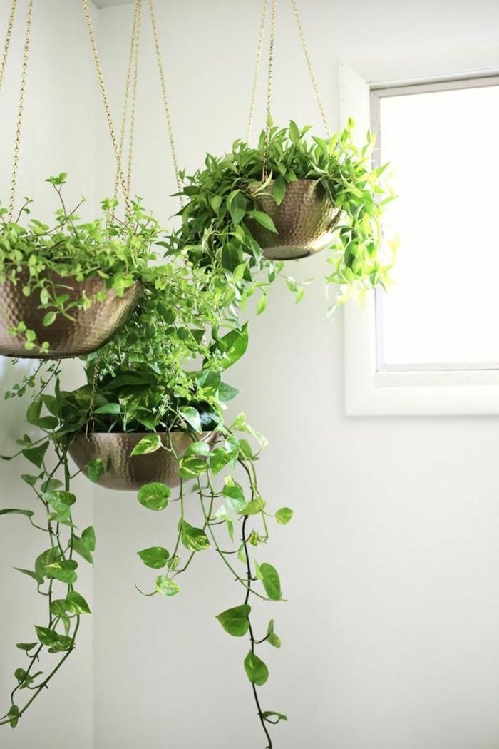 kücheneinrichtung dekoideen pflanzen hängen weiße wände