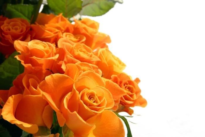 rosenfarbe bedeutung orange rosen
