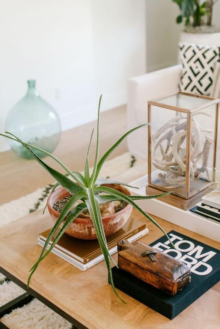 sukkulenten arten Aloe wohnzimmer dekorieren