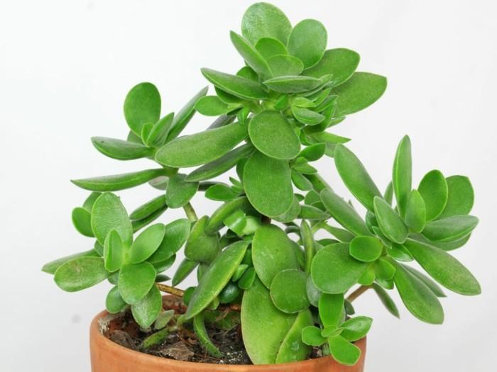 Sukkulenten Zimmerpflanzen sukkulenten arten die vielfältige durstkünstler sind tolle
