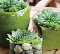 Sukkulenten Arten – Die vielfältigen Durstkünstler sind tolle Pflanzendekoration