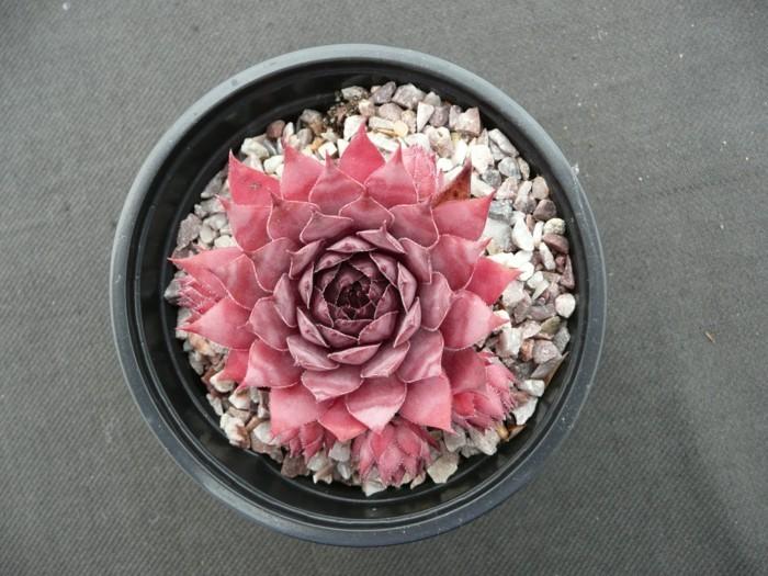 sukkulenten deko pflanzen dekoration
