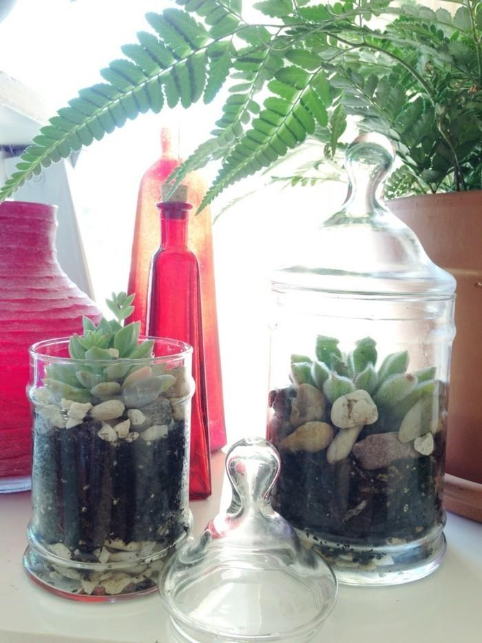 sukkulenten im glas einmachgläser verwenden