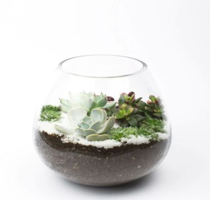 sukkulenten im glas im blickfang kreative deko ideen mit pflanzen. Black Bedroom Furniture Sets. Home Design Ideas