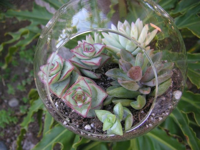 sukkulenten im glas hängen terrarium ideen
