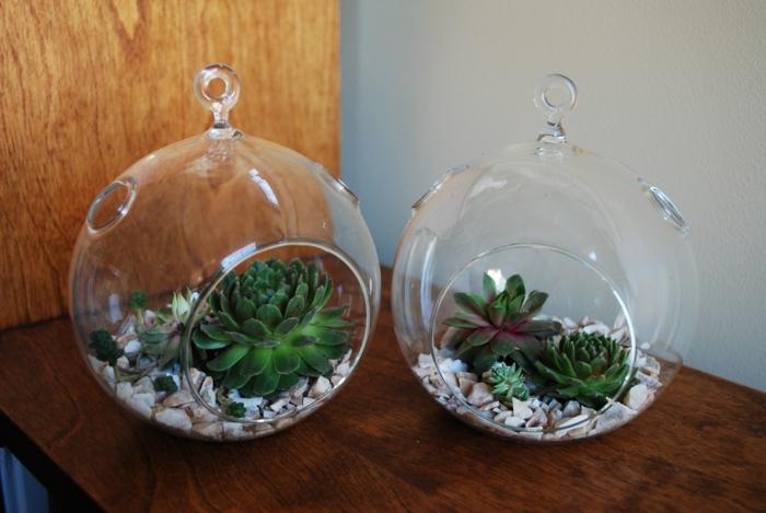 sukkulenten im glas hängende dekoideen
