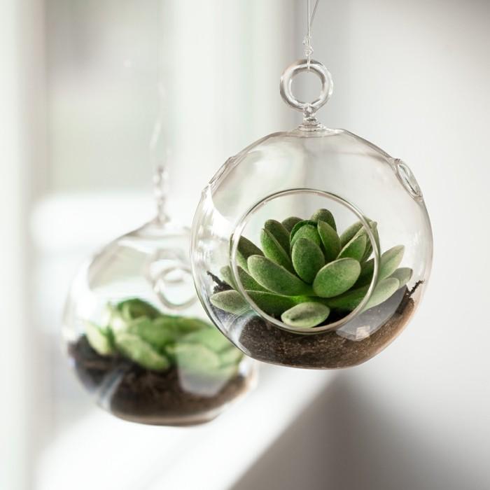sukkulenten im glas hängende terrarien