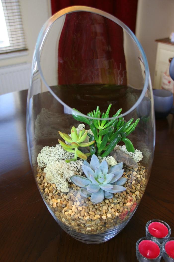 sukkulenten im glas kies schöne deko zimmerpflanzen