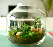 Diy With Glass Bottle For Air Plant