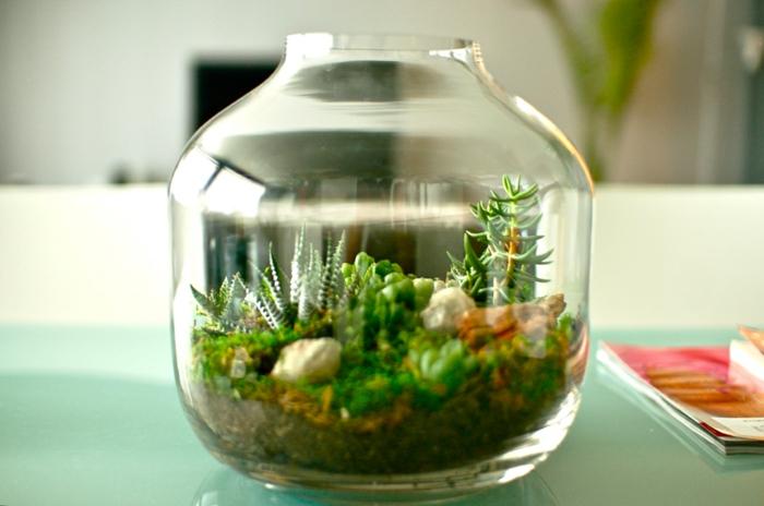 sukkulenten im glas mini schöne dekoideen