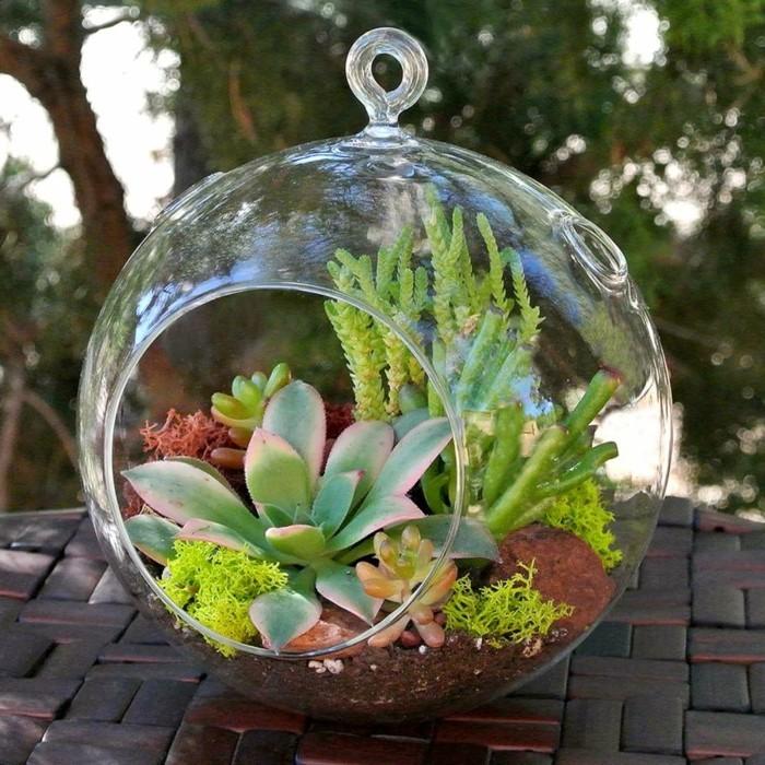 sukkulenten im glas terraruim arrangieren