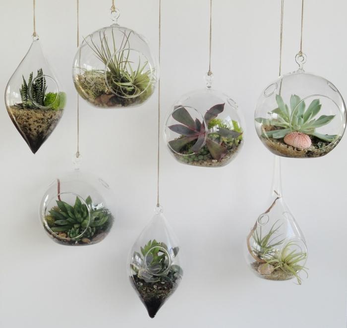 sukkulenten im glas terraruim gestalten hängen