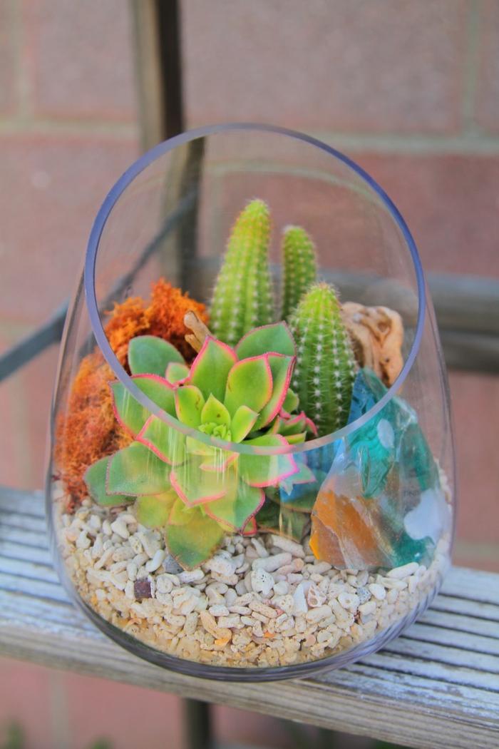 Sukkulenten im glas im blickfang kreative deko ideen mit for Pflanzen deko innen