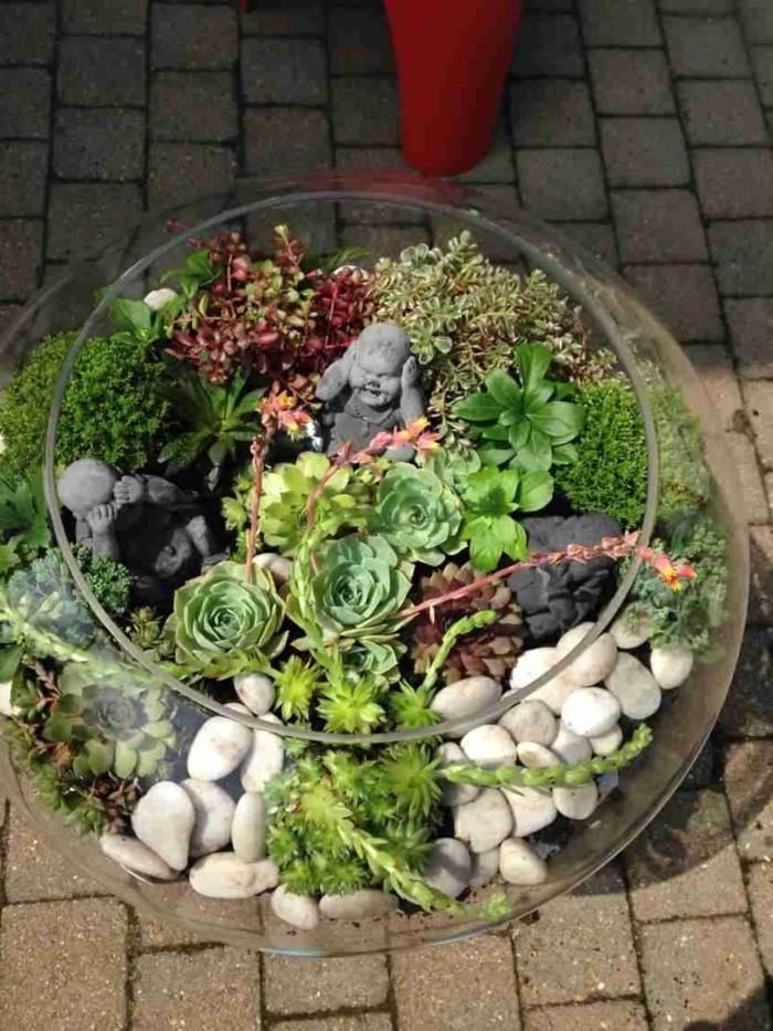 sukkulenten zimmerpflanzen dekoideen innen und draußen