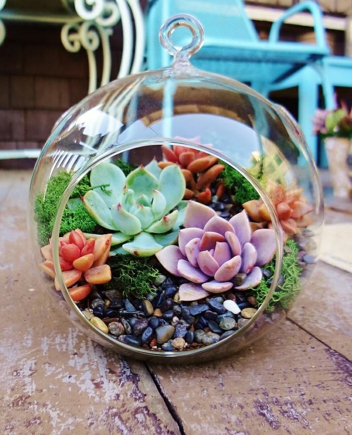 sukkulenten zimmerpflanzen dekoiden garten terrarium