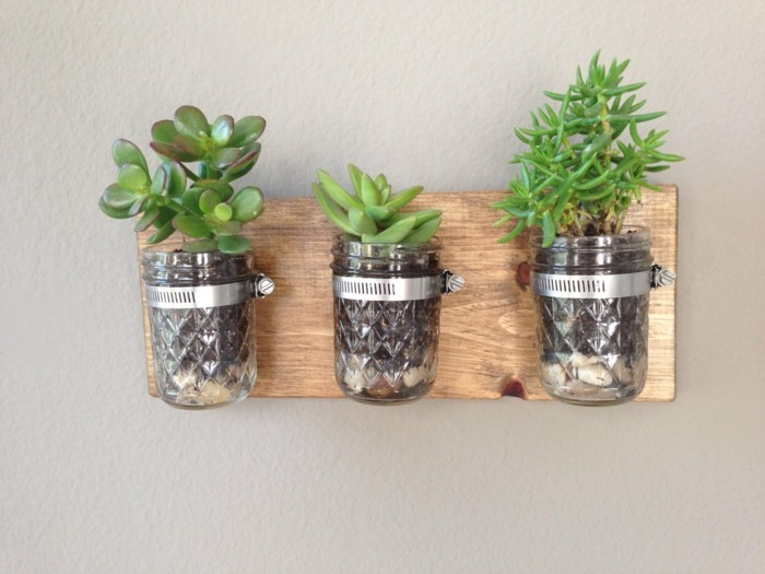 sukkulenten zimmerpflanzen einmachgläser wanddeko ideen