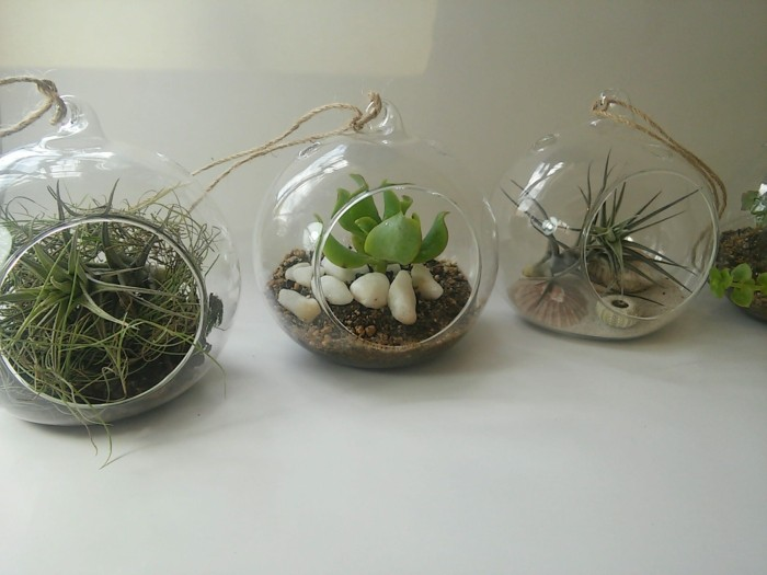 sukkulenten zimmerpflanzen glas dekoideen