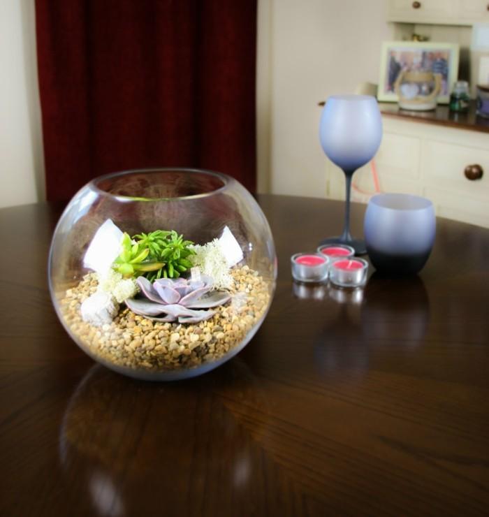 sukkulenten zimmerpflanzen terrarium kies deko