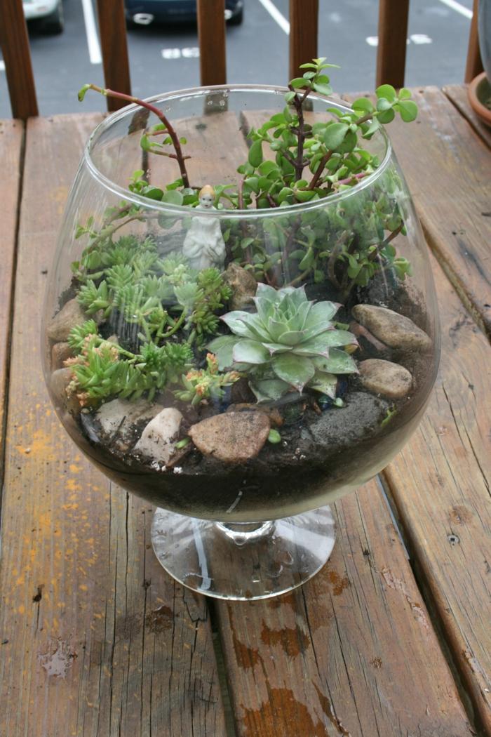 sukkulenten zimmerpflanzen terrarium steine glas