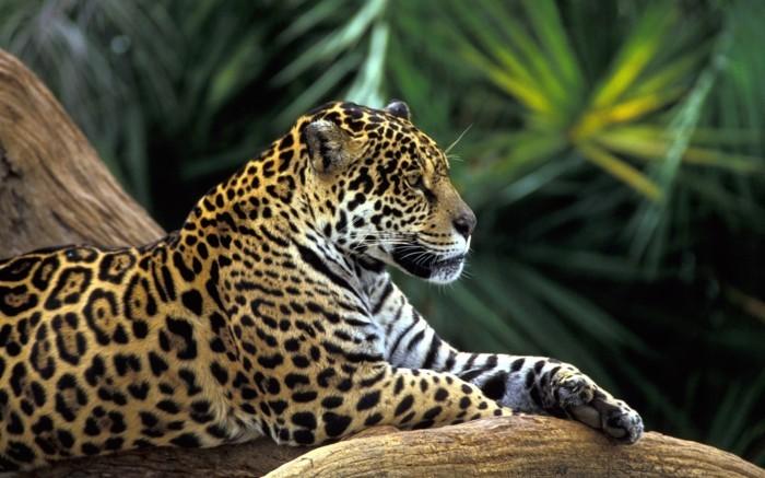 tierwelt regenwald