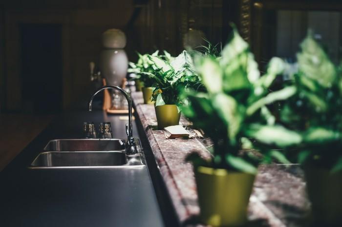 küchenkräuter und zimmerpflanzen in der küche