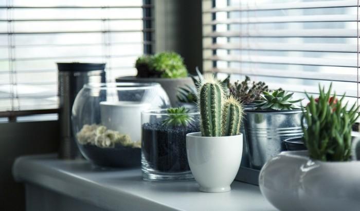 kakteen und sukkulenten auf der fensterbank pflegen keramik porzellan ubertöpfe
