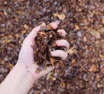 Selbst den Kompost anlegen – So spart man Geld und erhöht seine Lebensqualität