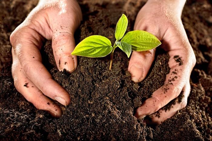 kompost anlegen frische muttererde