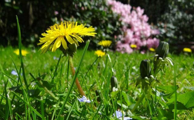 ▷gartenmöbel Aus Polyrattan - über 1000 Ideen Für Gartenbänke ... Tipps Fur Passende Gartenmobel
