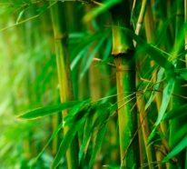 Nachhaltige Kleidung aus Bambus für Ihr körperliches und seelisches Wohlbefinden!