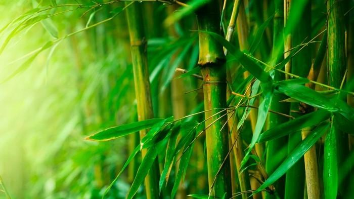 nachhaltige kleidung aus bambus f r ihr k rperliches und seelisches wohlbefinden. Black Bedroom Furniture Sets. Home Design Ideas