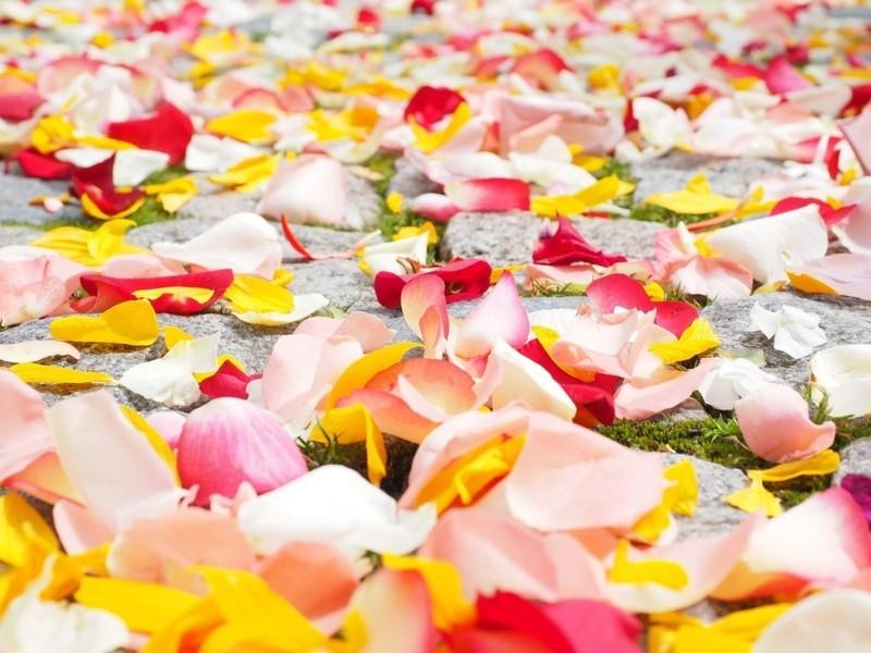 rose petals 693570 1280