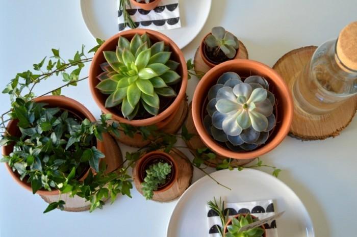 sukkulenten in keramikblumentöpfe auf dem esstisch arrangieren