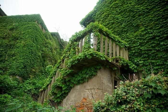 weltreisen gouqi terrasse grünes dorf
