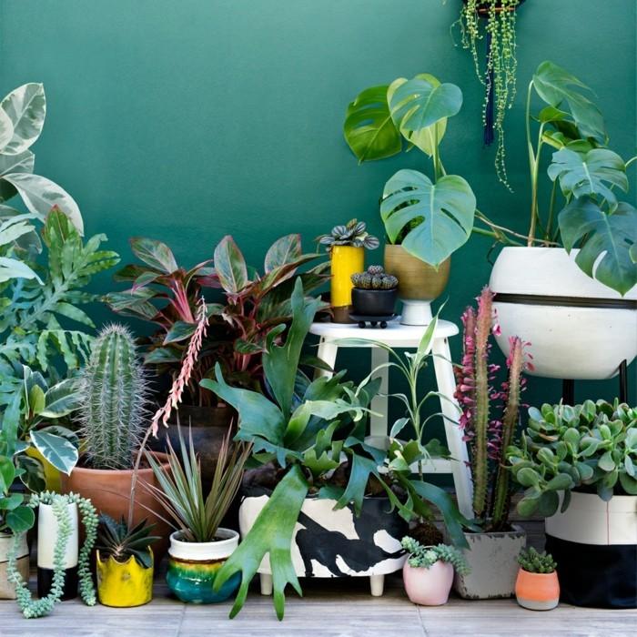 zimmerpflanzen für den urban jungle trend