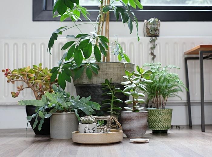 zimmerpflanzen in keramik übertöpfe garten im wohnzimmer gestalten