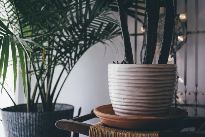 zimmerpflanzen und palmen in keramik blumentöpfen