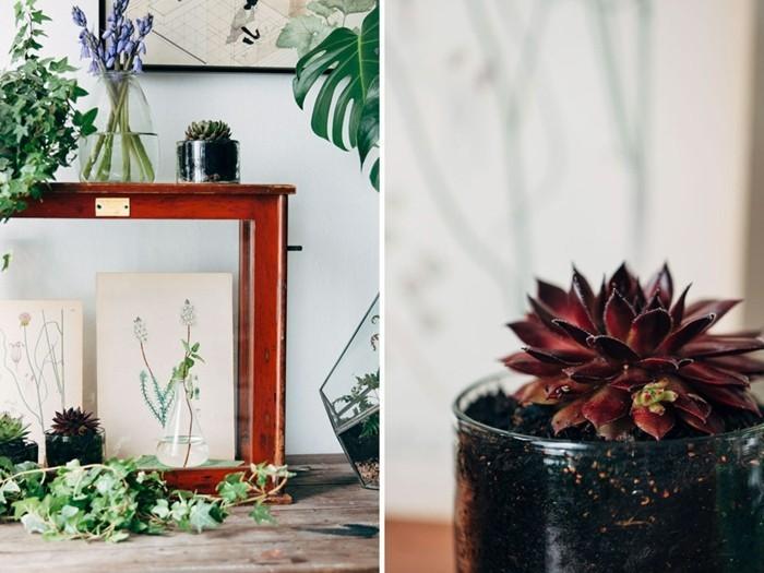 zimmerpflanzen verschönern alte kommode efeu sukkulenten