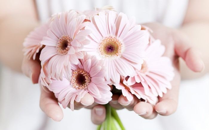 blumenstrauß vintage gerbera rosa
