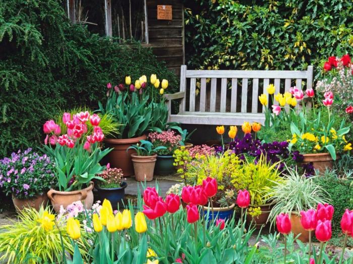 gartenideen mit farbigen tulpen in blumentöpfen