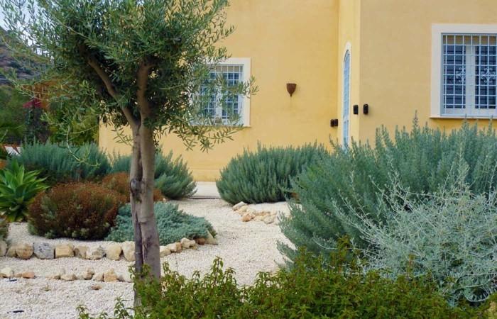 mediterraner garten pflanzen und steine kombinieren
