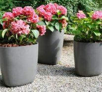 Pflanzkübel – Erst im richtigen Pflanzgefäß zeigen Pflanzen ihre natürliche Pracht