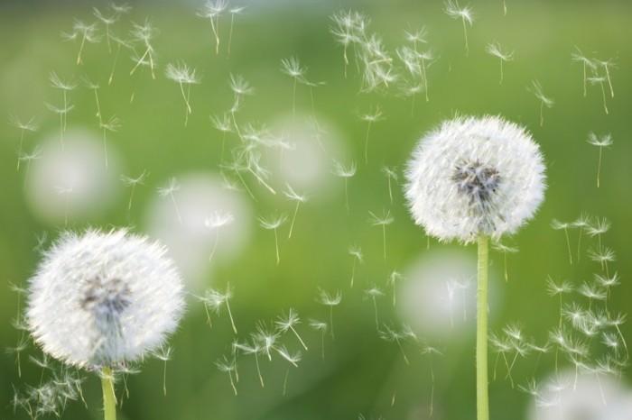 pollenallergie bekaempfen im fruehling
