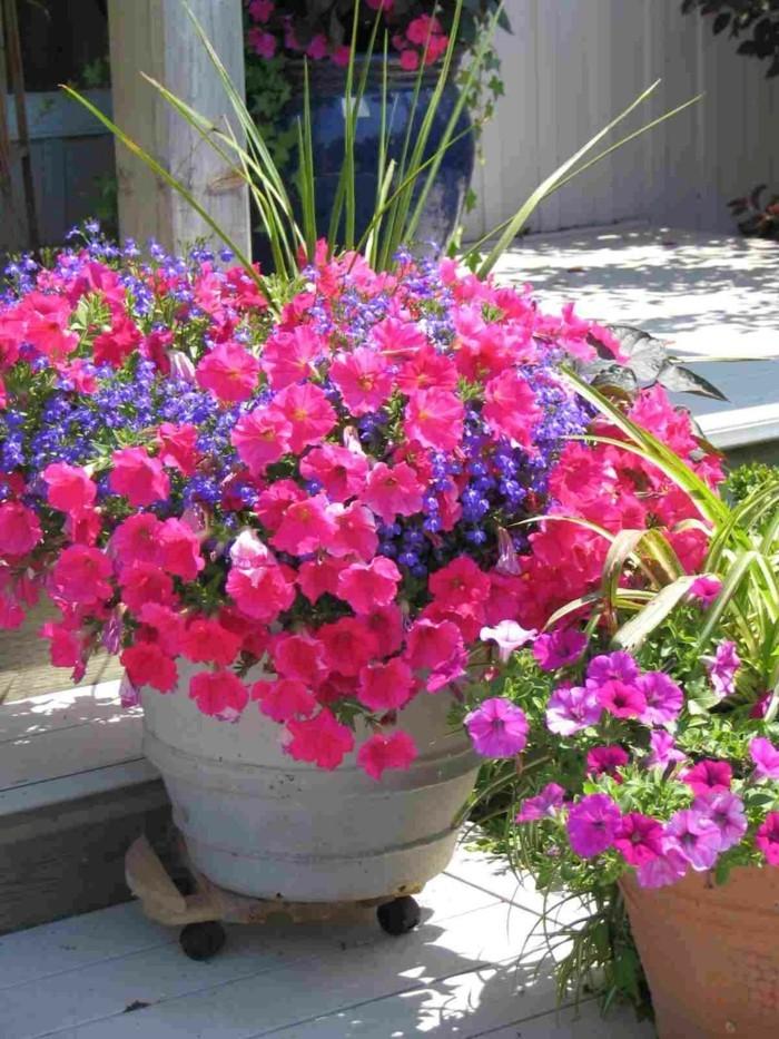 schöne gärten gartenpflanzen in blumentöpfen