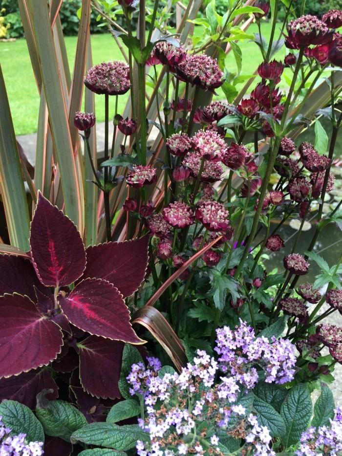 schöne gärten pflanzen richtig kombinieren