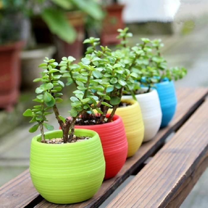schöne gärten sukkulenten im topf verschiedene farben